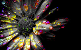 black and colour 9